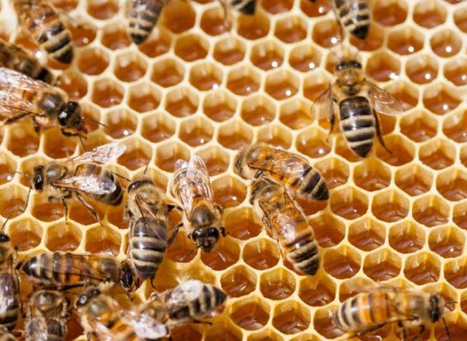 Torna la Giornata mondiale dedicata alle api