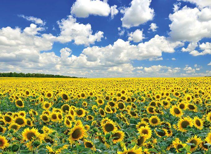 Nel Decreto Rilancio oltre un miliardo per l'agricoltura