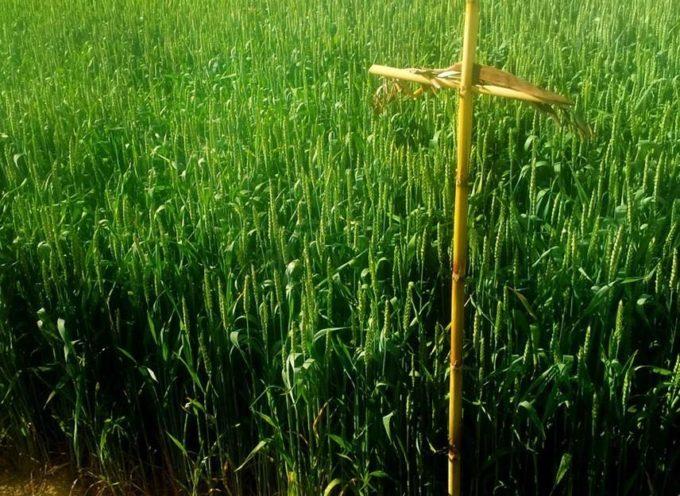 """Le antiche tradizioni: il """"Giorno di Santa Croce""""."""