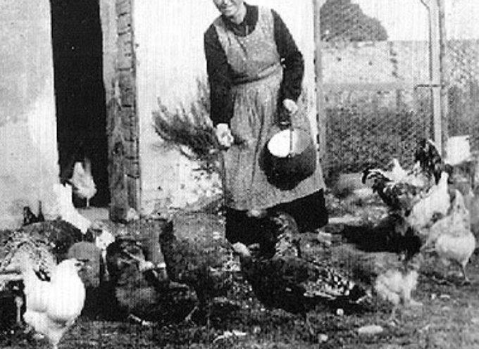 il primo lavoro del mattino, in campagna, era il governo degli animali