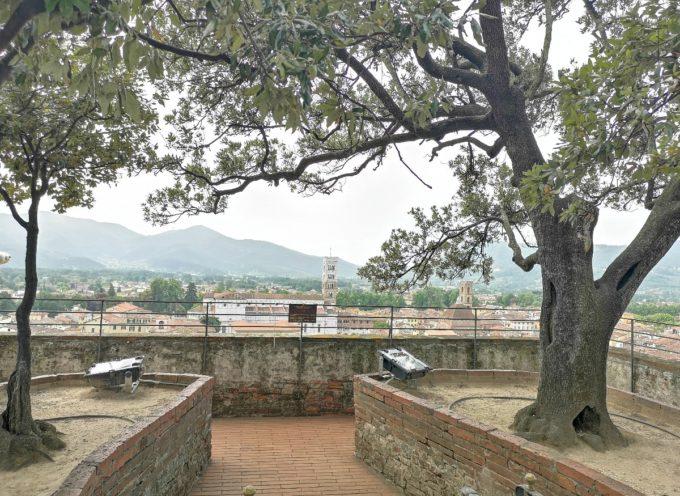 riaprono la Torre Guinigi, la Torre delle Ore e l'Orto Botanico: