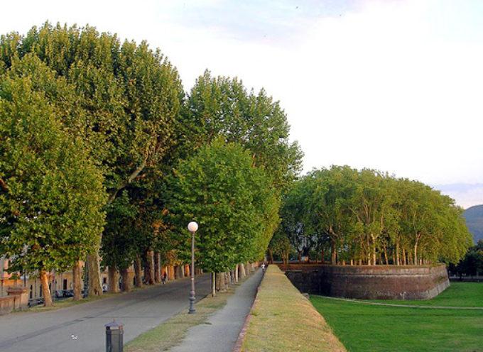 Tremila nuovi alberi in aree comunali: affidato all'Associazione Talea il progetto per la messa a dimora di specie arboree in aree pubbliche
