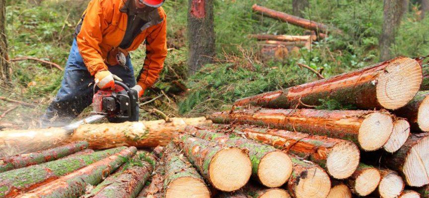 Taglio del bosco. Proroga al 31 maggio per i cedui sopra gli 800 metri, l'ordinanza della Toscana