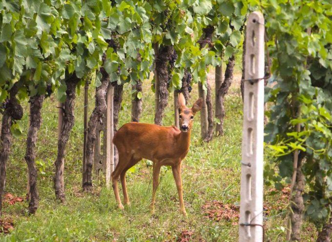Regione Toscana. Interventi di controllo della fauna selvatica e procedura sul sistema Artea