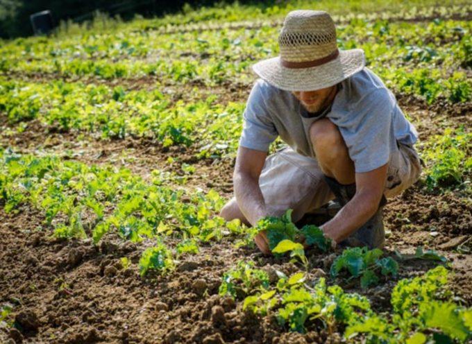 Agricoltura, bando da 3 milioni per Garfagnana, Lunigiana, Media Valle del Serchio