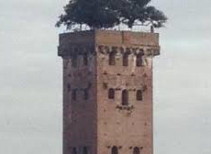 Domani riaprono i musei di Lucca la Torre Guinigi, la Torre delle Ore e l'Orto Botanico, Domus Romana