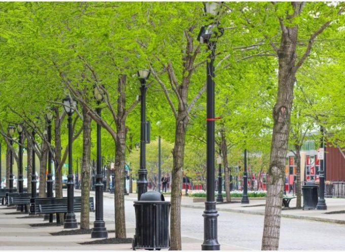 Gli alberi e il verde in città sono più importanti che mai (soprattutto durante una pandemia)