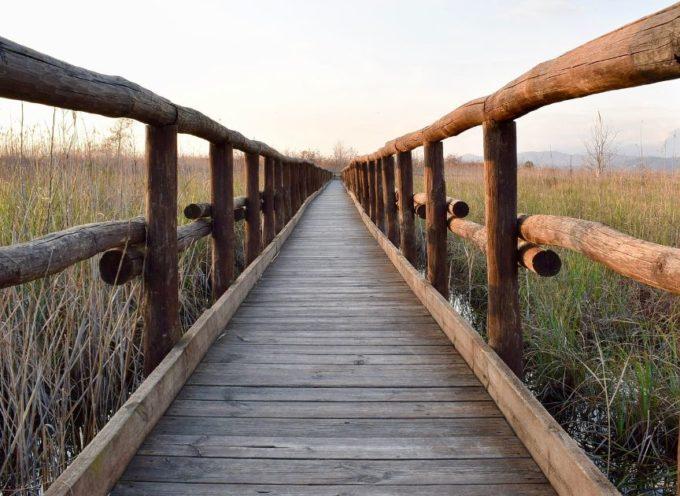 Massarosa – Bando di selezione per 12 giovani nel progetto per l'ambiente in Toscana
