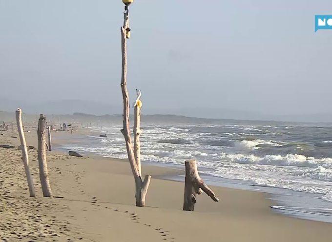 La Lecciona e le altre, Marchetti (FI): «Linee guida univoche per il controllo delle spiagge libere. No a una costa toscana a tocchetti»