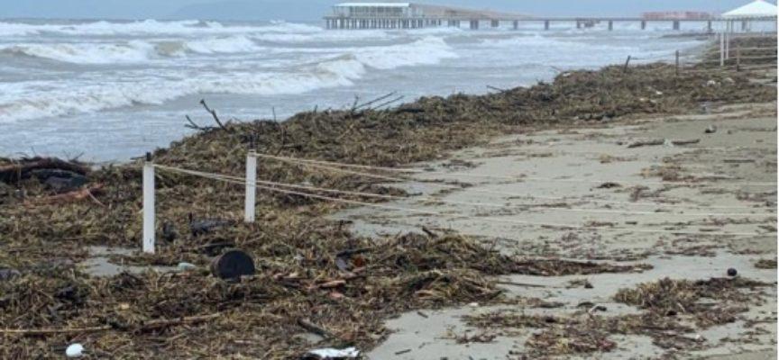 sindaco Pietrasanta su spiaggia invasa sfalci e detriti, chiederemo risarcimento a Consorzio Bonifica per costi rimozione e smaltimento