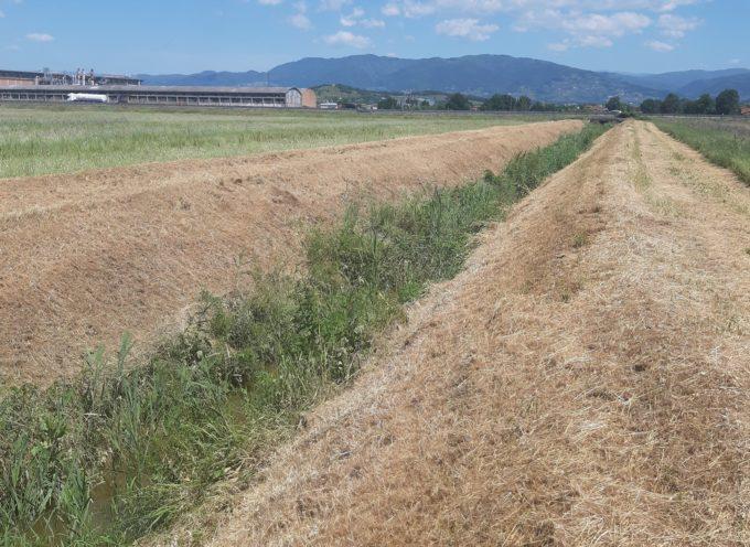 Sicurezza idraulica e corridoio ecologico: a Capannori,