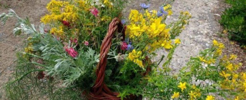 Le buone erbe del 23 Giugno, vigilia di San Giovanni Battista.