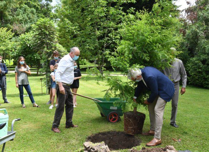 Una Metasequoia glyptostroboides per ricordare il secondo centenario dalla fondazione dell'Orto botanico di Lucca