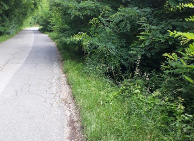 Capannori, Martinelli (FDI): si tagli l'erba a bordo strada in Via Circonvallazione