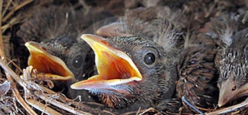Recupero di piccoli volatili e mammiferi in difficoltà, Porcari attiva il servizio con Anpana