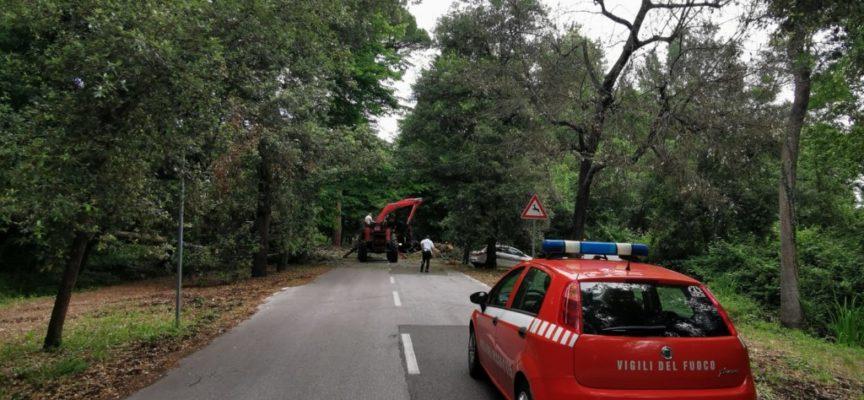 Crolla un albero sul viale dei Tigli: nessun ferito