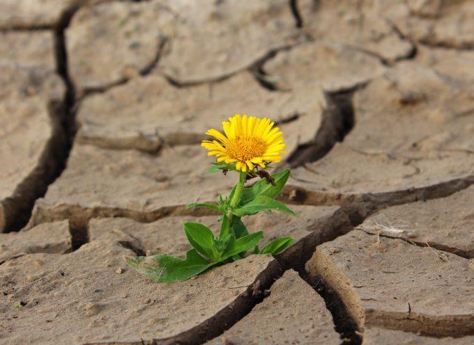 La crisi climatica preoccupa gli agricoltori: 1/5 d'Italia a rischio desertificazione