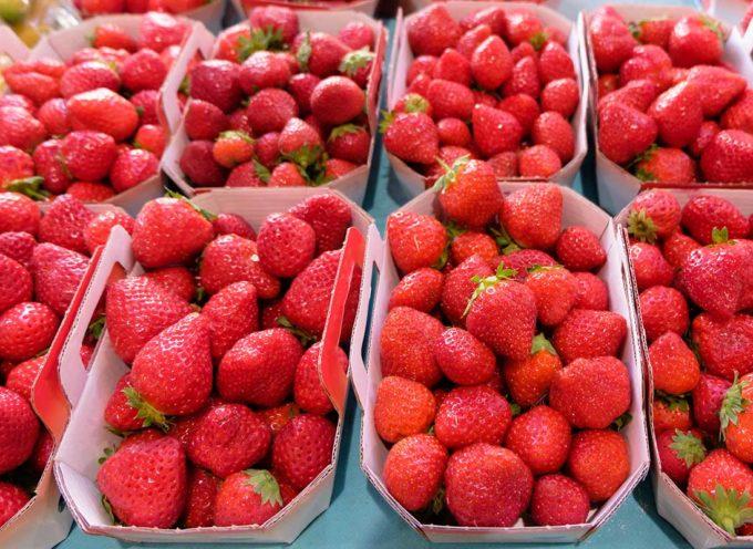 """Fragole """"amare"""": fino a 9 pesticidi (anche vietati) in un solo frutto"""