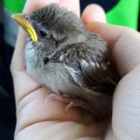 Da oggi è possibile segnalare all'Anpana ritrovamenti di piccoli mammiferi, uccelli e covate