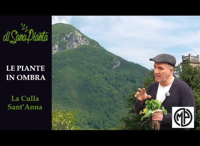 Le erbe in ombra dei castagni tra La Culla e Sant'Anna di Stazzema