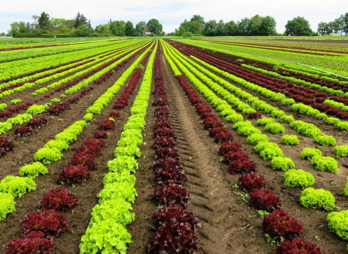 L'agricoltura intensiva.