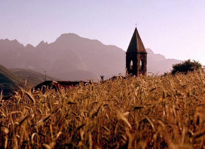 Il campanile di Orzaglia tra le spighe di farro ormai pronte per la trebbiatura.