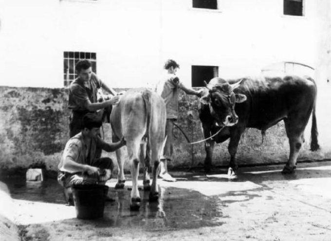 Il bagno agli animali della stalla