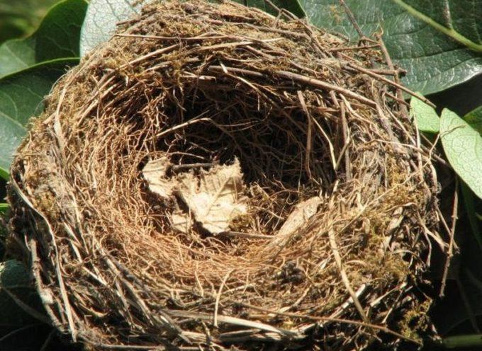 Siamo nella seconda parete dell'estate, e molte specie di uccelli hanno già fatto le loro covate,