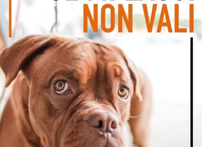 """Animali: """"Se mi lasci non vali"""", campagna del comune di Pietrasanta contro gli abbandoni"""