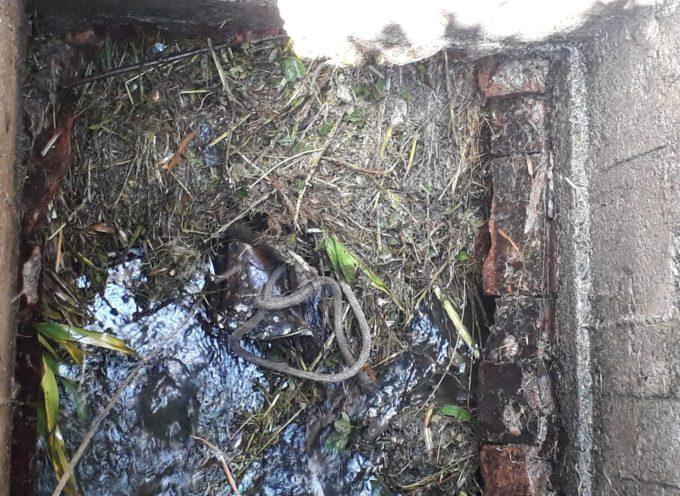Marlia: Torna libero di scorrere il Canale Nuovo ostruito dai rifiuti