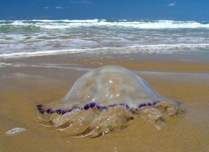 Uccidere meduse (o altri animali) è reato. Si rischiano fino a 18 mesi di carcere e multe salate