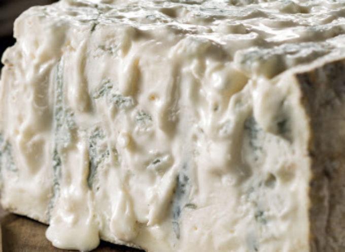 Allerta listeria nel formaggio italiano: gorgonzola contaminato, scatta il ritiro.