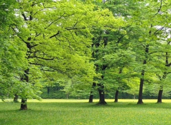 Cambiamenti climatici, la Toscana punta sugli alberi in città