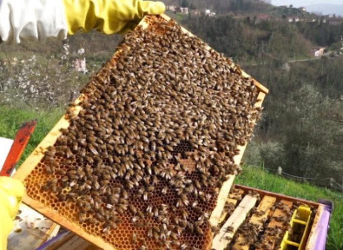 Le api operose della Garfagnana