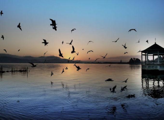 Volete immergervi in una visita ambientale, culturale e romantica? Venite con noi a scoprire o riscoprire il nostro Lago.