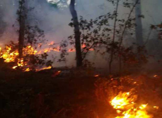 un incendio nella pineta di Levante a Viareggio