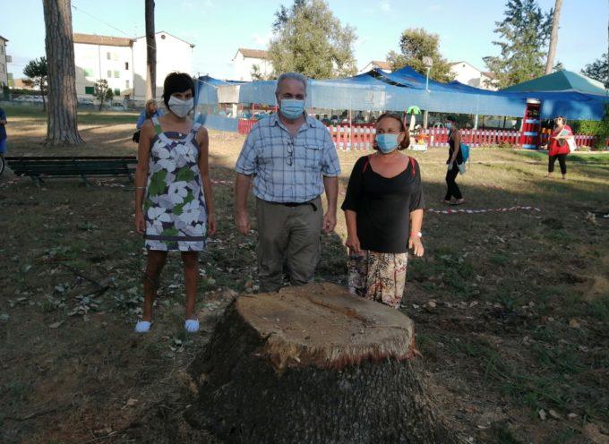 Viareggio a Sinistra per l'ambiente – Basta con gli abbattimenti di alberi in zona Pineta