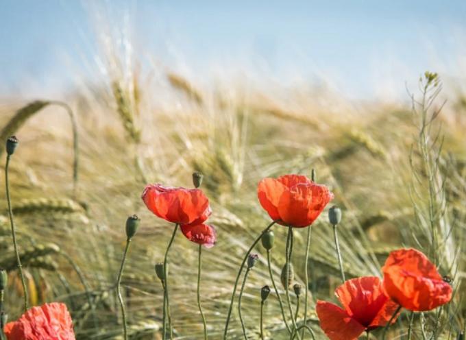 Agricoltura, Marchetti (FI): «Dalla Regione risveglio elettorale