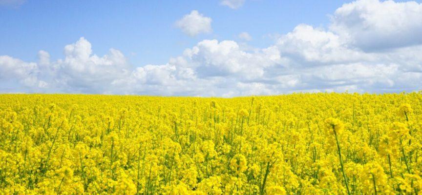Aumentano i prezzi dei prodotti alimentari a luglio