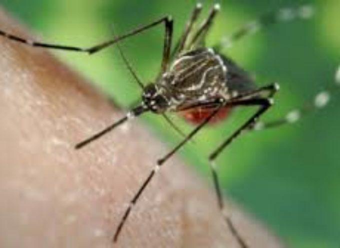 PIETRASANTA – : terza fase piano anti-zanzare, interventi di disinfezione in griglie, caditoie e fossi su tutto il territorio
