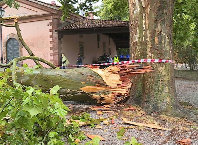 Tragedia sfiorata sulle Mura, fulmine spezza ramo di venti metri