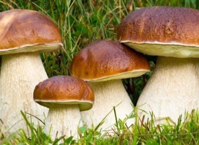 Sicuri a Cercar Funghi. in valle del serchio –
