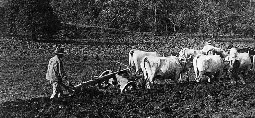 Continua il lungo lavoro dell'aratura dei campi destinati alla semina del grano