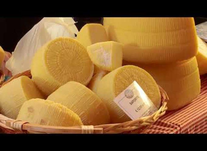 La battaglia dei 29 formaggi alla Fiera di Castelnuovo