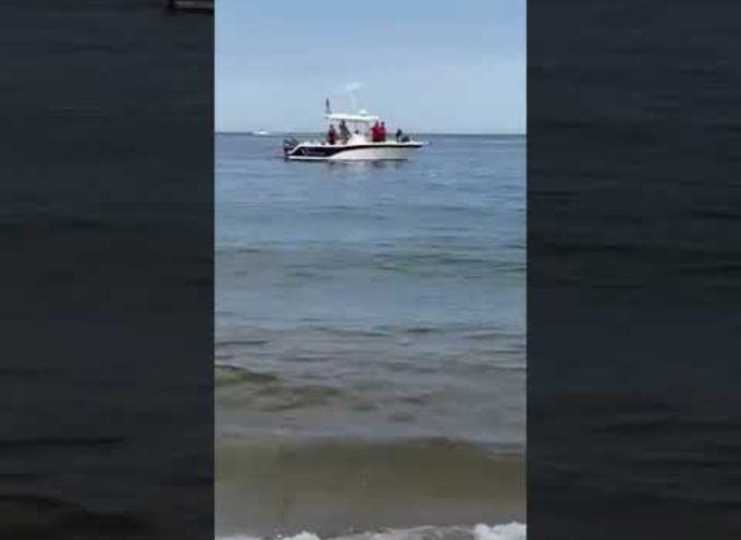 Grande squalo bianco a tre metri dalla riva: il terrore dei bagnanti
