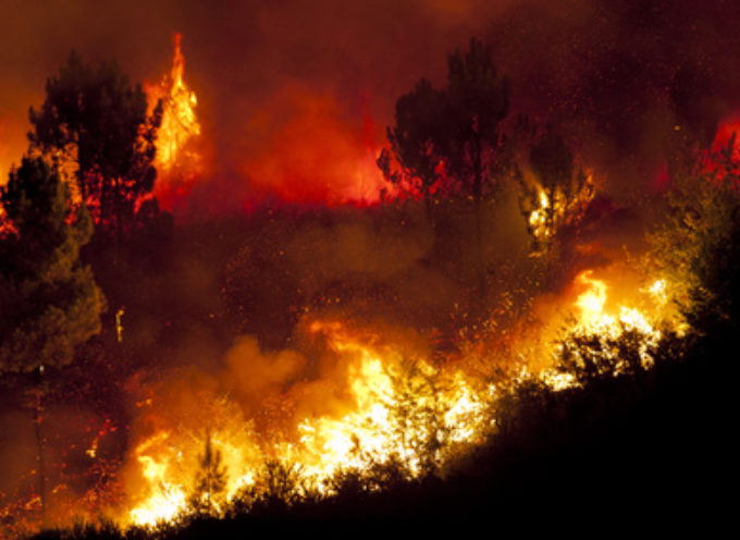 Aumentano gli incendi boschivi