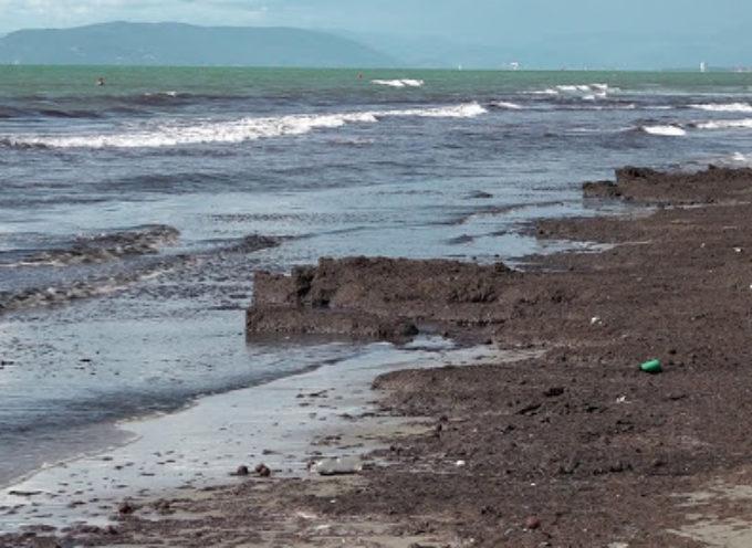 Lavarone e plastica in spiaggia: appello dei balneari di Focette