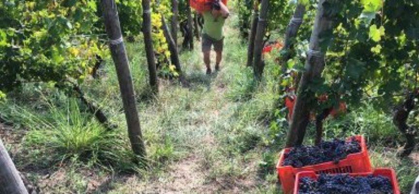 Slow Wine 2021: il 4 ottobre la presentazione della guida che unisce Terra Madre Salone del Gusto e la Milano Wine Week