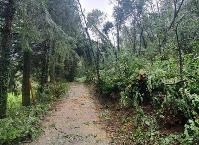 Questa mattina sono stata contatta da alcuni cittadini del Pian della Rocca, perché degli alberi ad alto fusto sono caduti sulla strada comunale.