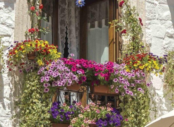 I fiori di lunga durata: le petunie.
